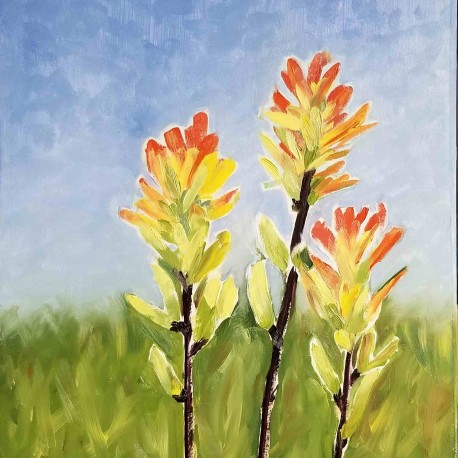 Pam Jackson - Indian Paintbrush